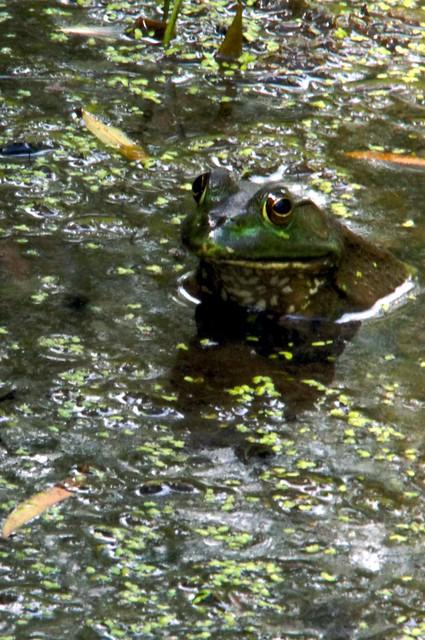 Feeling Froggy