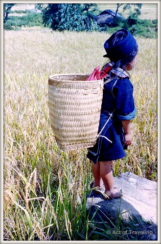 Young girl in rice fields (Sapa)