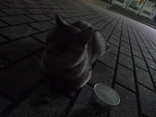 長者原SA(上り)の猫, 陸前高田でボランティア Volunteer at Rikuzentakata, Iwate pref, Deeply Damaged Area by Japan Quake