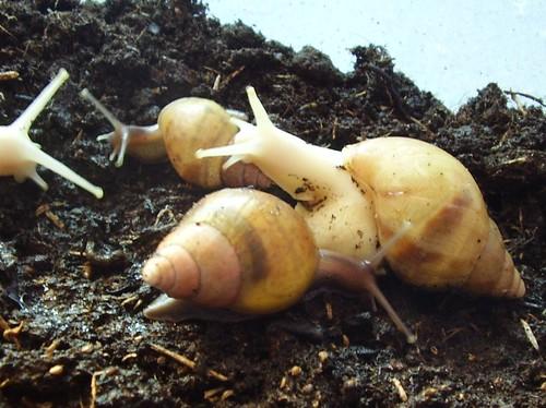 snails 016