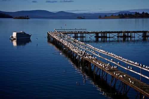 Bird Pier