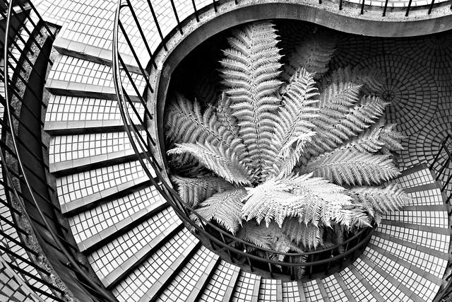 Stairway and Fern - Embarcadero Center - San Francisco