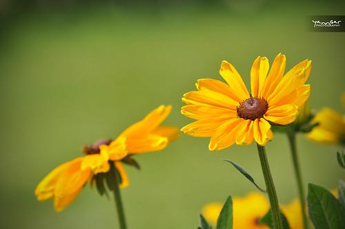 Yellow flower by YannGarPhoto.wordpress.com
