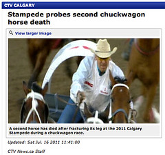 Second chuckwagon horse death - Does Calgary Stampede get it