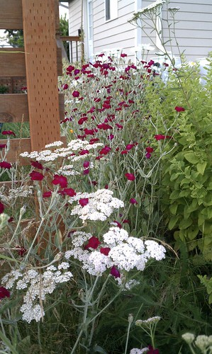 July 19, 2011: The wildflower garden