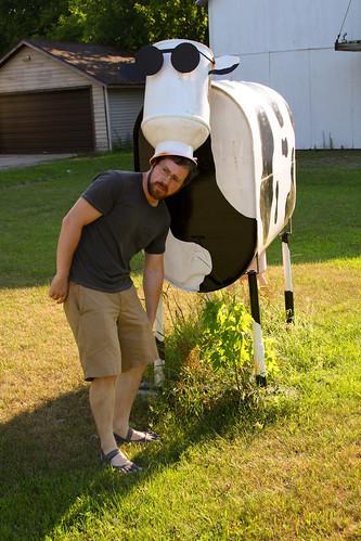 Cow menace