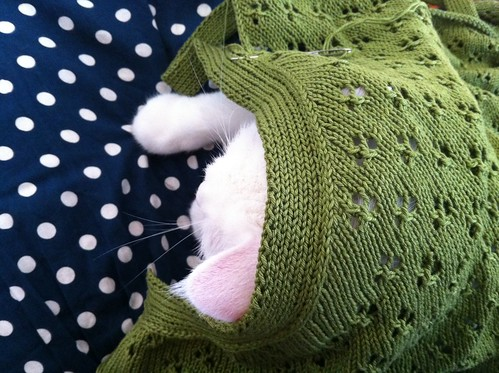 knitting and a cat
