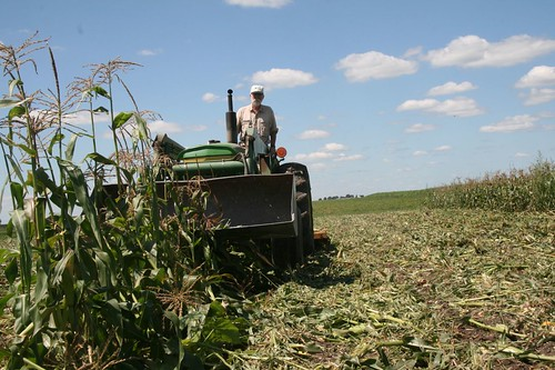 mowing sweet corn