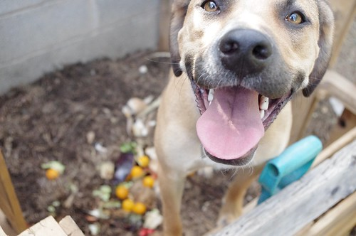 Happy Compost Dog