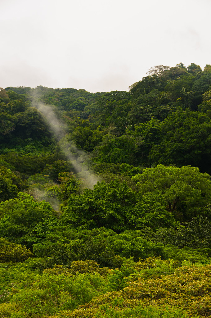 The steaming jungle