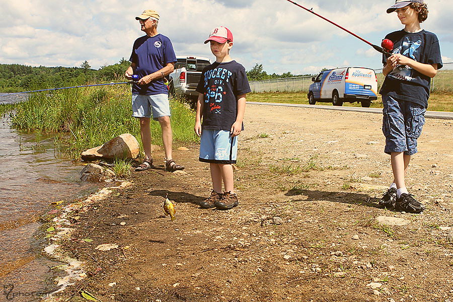 Catch and Release: Sunfish (2)
