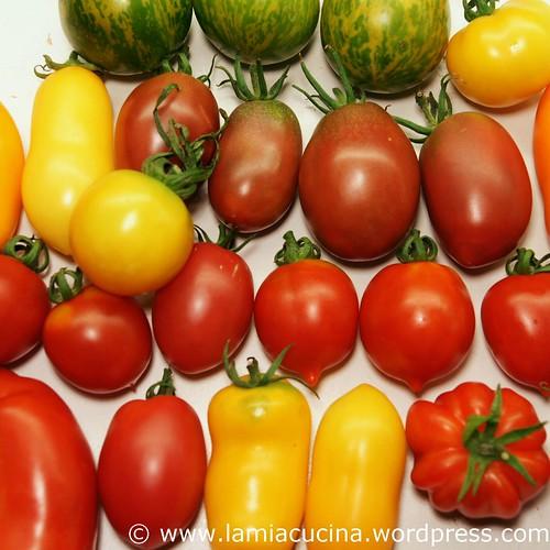 Hämiker Tomaten 0_2011 08 05_5349