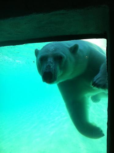 Polar Bear!