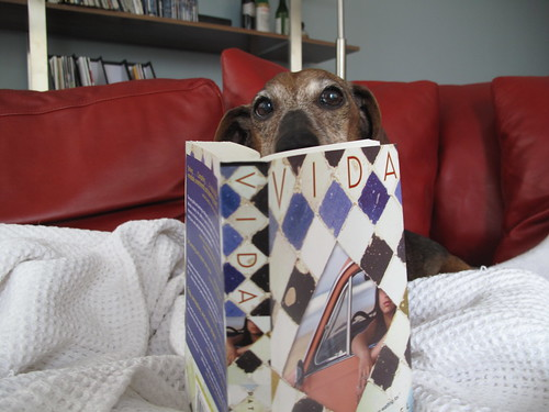 Scarlet the Wiener Dog reading Vida by Patricia Engel