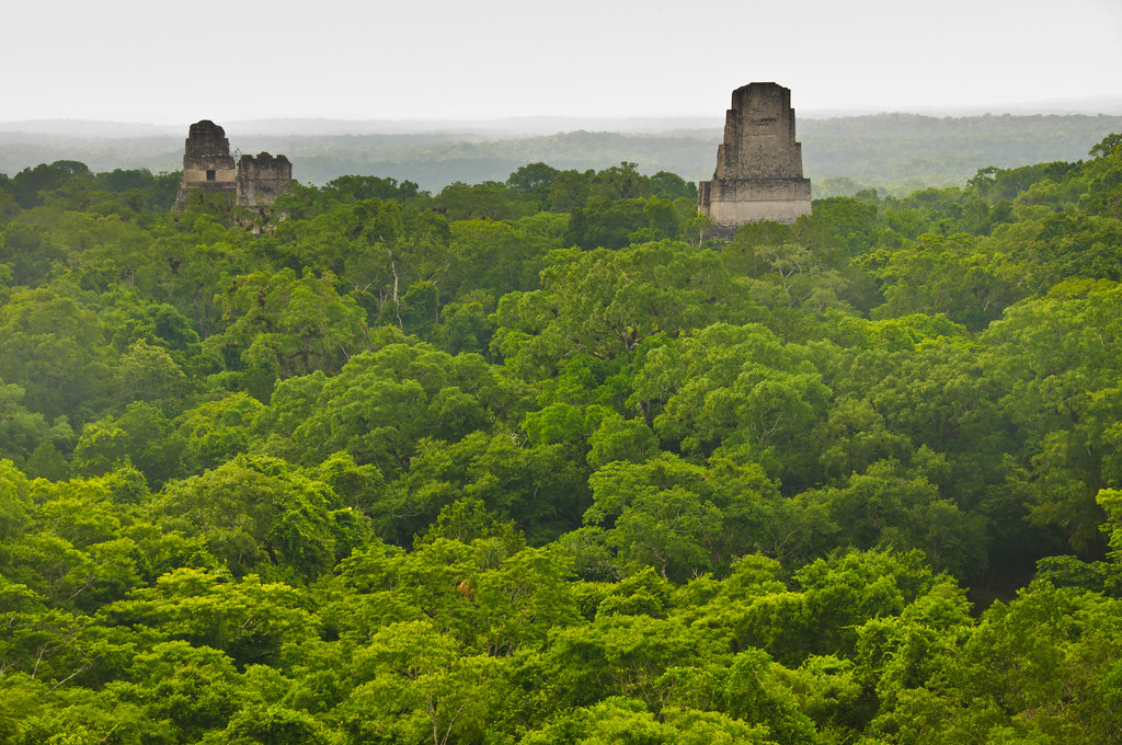 Temples I, II and V from Temple IV, Tikal