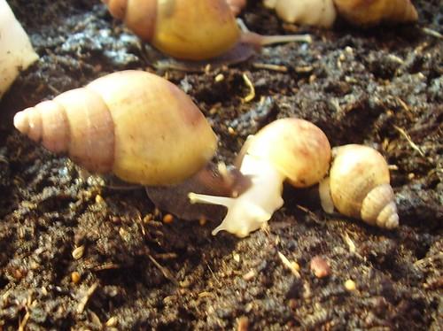 snails 009