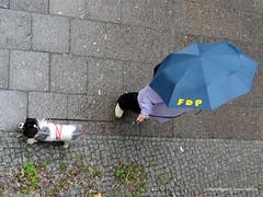 Hundewetter für die FDP