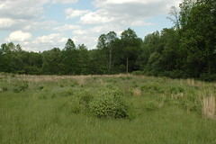 2007-05-28_038