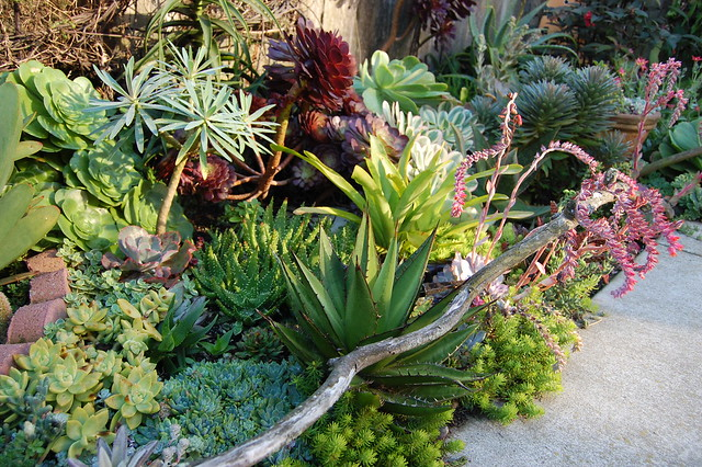 Succulents Wonderland