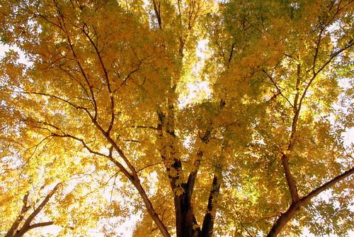 Beautiful Illinois Autumn