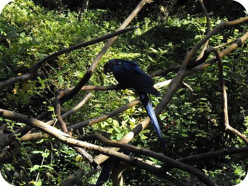 Nashville Zoo 2