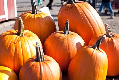 PumpkinPatch-1
