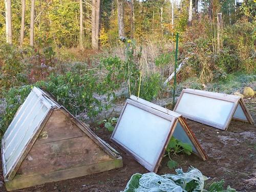 sheltered garden