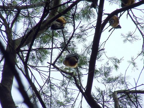 Centennial Park Fruit Bats by smallfox2