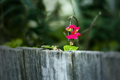 flowered fence by Matt Hovey