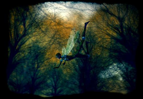 jasmine b dragonflight 171011
