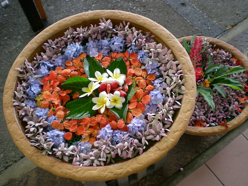 Payung's flowers 1