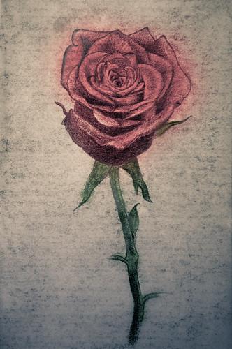 RoseDrawing-4922.jpg