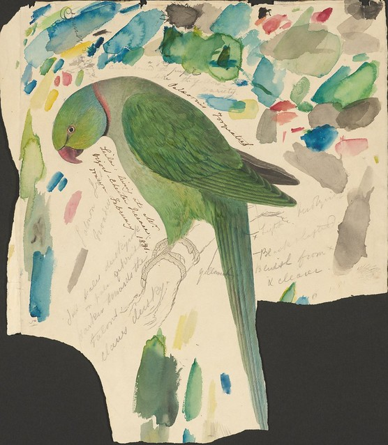 Green parrot - ink, graphite and watercolour drawing (31)