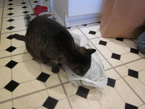 Katrina and bag