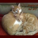 Sheeba and her BFF