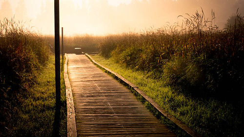 Bright Fog in the Marsh by Terry Schmidbauer