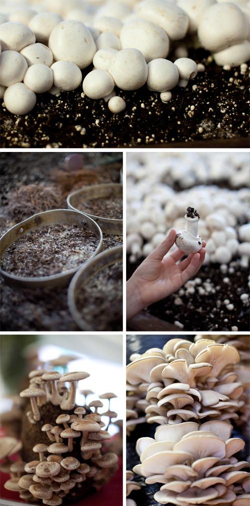 2_Mushroom_festival