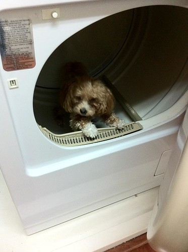 UT - 9-8-11 Bebe in dryer