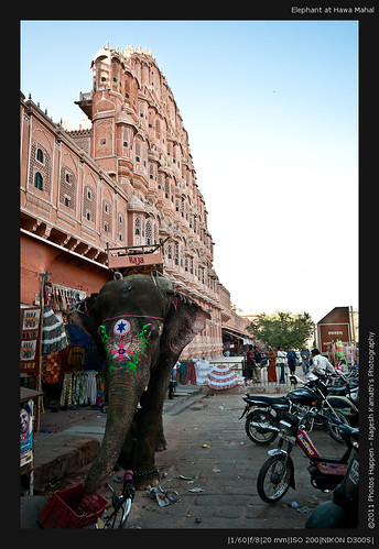 Elephant at Hawa Mahal