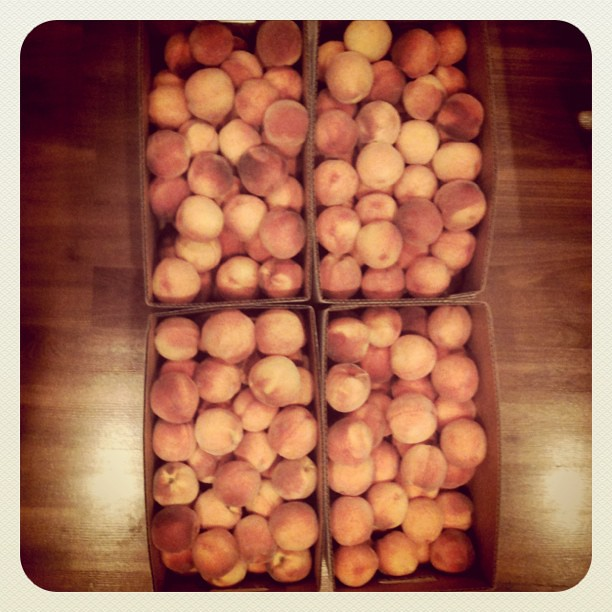 2 bushels of peaches means it is time to make peach pie, peach ice cream and start canning them for winter!