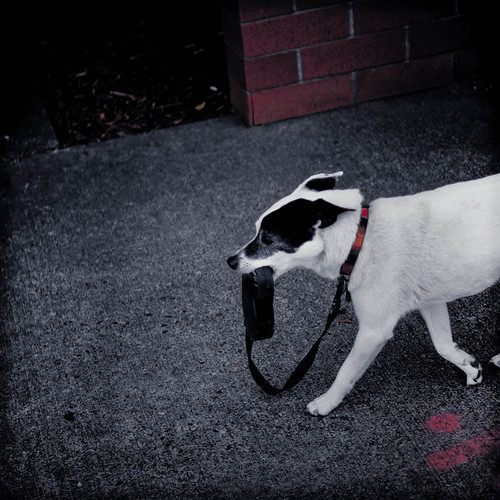 It's Not About the Leash. by Terry Schmidbauer