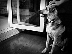 Dog Wondering If There's Food In The House That He Can Get To