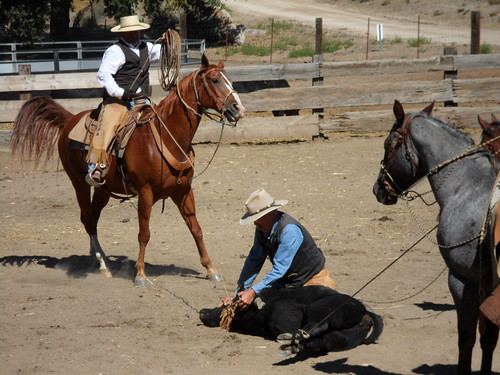 Roping at Reed Valley Ranch