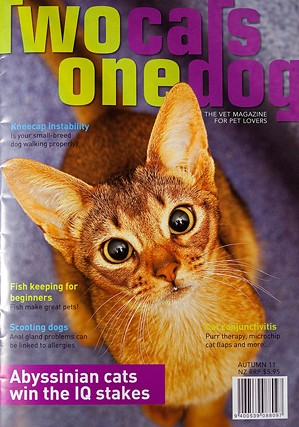 Abyssinian-cats-Sharon-Blance-photographer-7