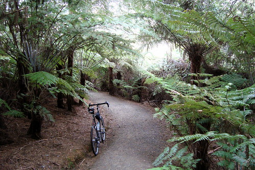 Road Ride Through the Fern Glade
