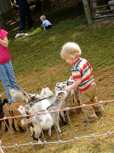 Goats really like Jude.