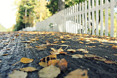 Fallen Leaves Fence Friday