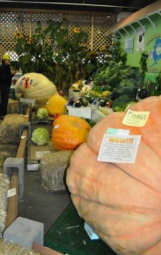 Giant Vegetables at the 2011 Alaska State Fair