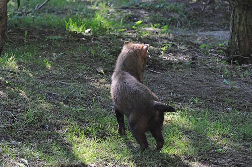 Waldhund im Gaia Park in Kerkrade