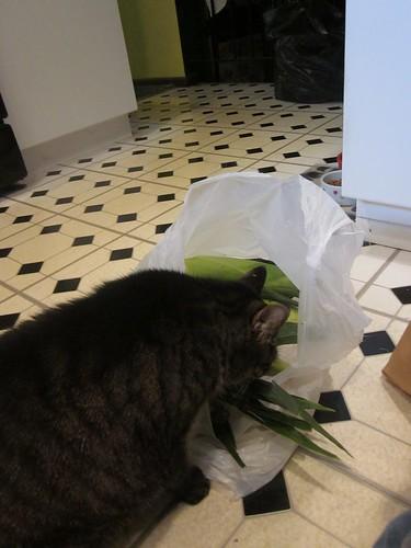 Katrina spies the corn husks